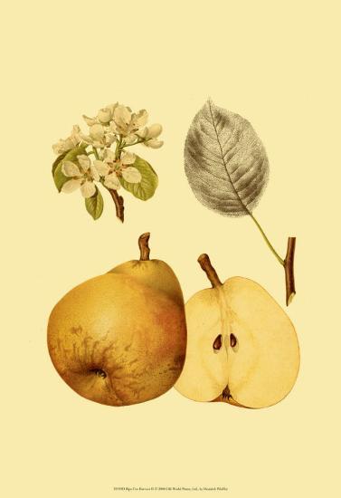 Ripe for Harvest II-Heinrich Pfeiffer-Art Print