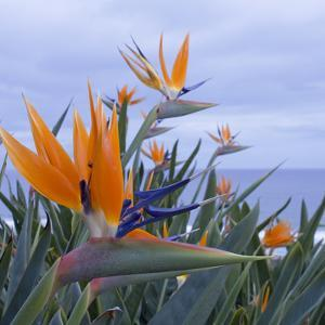 Bird of Paradise I by Rita Crane
