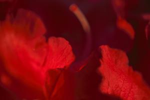 Crimson Petals I by Rita Crane