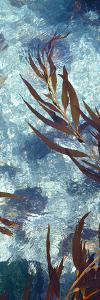 Mermaid Tresses V by Rita Crane
