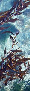Mermaid Tresses VI by Rita Crane