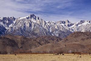 Mt. Whitney Range I by Rita Crane