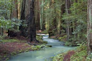 Redwood Forest II by Rita Crane