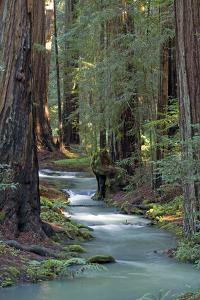 Redwood Forest IV by Rita Crane