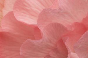 Rosy Begonia II by Rita Crane