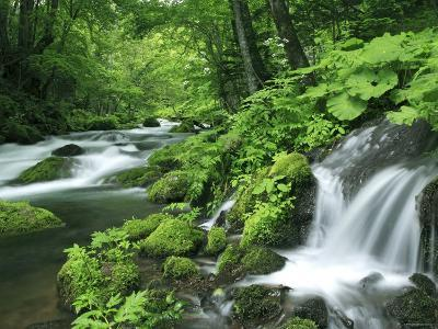 River Akan--Photographic Print