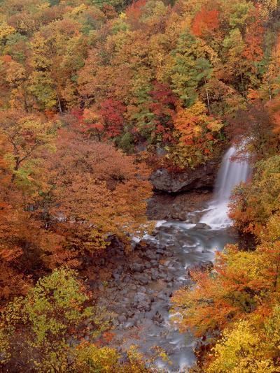 River and Autumn Leaves--Photographic Print