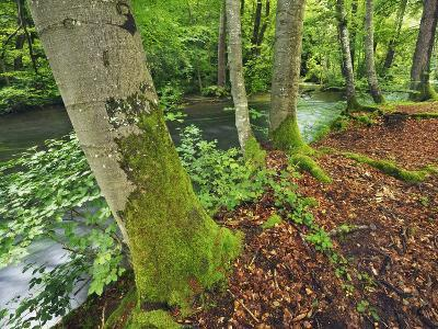 River and Beech trees-Frank Krahmer-Photographic Print