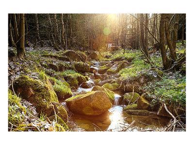 River Boulders Primeval Forest--Art Print