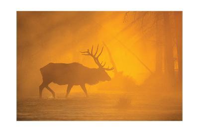 River Crossing-Gary Crandall-Art Print