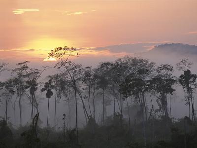 River Edge at Dawn, Lower Urubamba River, Amazon, Peru-Pete Oxford-Photographic Print