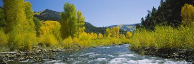 River Flowing in the Forest, San Miguel River, Colorado, USA--Photographic Print