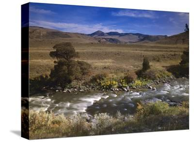 River flowing though meadow, Yellowstone National Park, Wyoming-Tim Fitzharris-Stretched Canvas Print