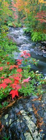 River Flowing Through a Forest, Black River, Upper Peninsula, Michigan, USA