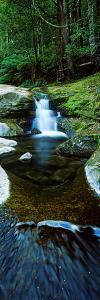 River Flowing Through a Forest, Liffey Falls, Liffey River, Tasmania, Australia