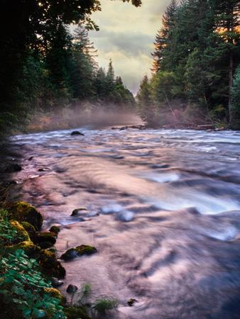 River flowing through a forest, McKenzie River, Belknap Hot Springs, Willamette National Forest...