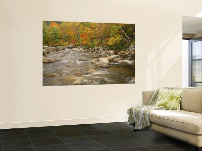 River Flowing Trough Forest in Autumn, White Mountains National Forest, New Hampshire, USA-Adam Jones-Wall Mural