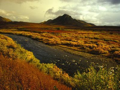 River Flows Through a Field in Autumn Color, Tombstone Territorial Park, Yukon Territory, Canada-Nick Norman-Photographic Print