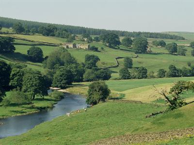 River Wharfe, Barden Bridge Near Bolton, Yorkshire, England, United Kingdom-Adam Woolfitt-Photographic Print