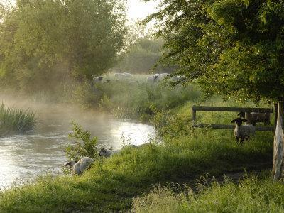 River Windrush Near Burford, Oxfordshire, the Cotswolds, England, United Kingdom, Europe-Rob Cousins-Photographic Print