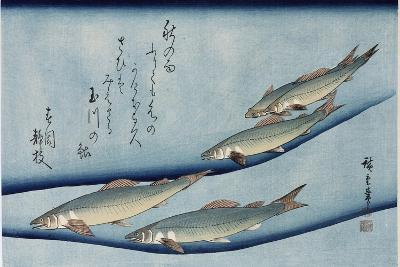 Rivertrout', from the Series 'Collection of Fish'-Utagawa Hiroshige-Giclee Print