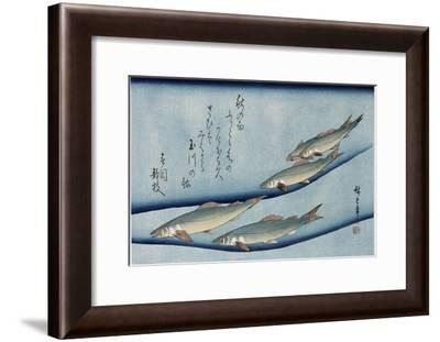 Rivertrout', from the Series 'Collection of Fish'-Utagawa Hiroshige-Framed Giclee Print