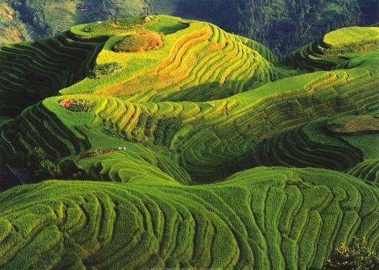 Rizieres en Terrasse, Chine-Keren Su-Art Print