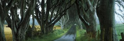 Road at the Dark Hedges, Armoy, County Antrim, Northern Ireland--Photographic Print