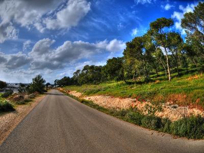 Road in a Field in Hof Hacarmel near Haifa, Israel- aharond-Photographic Print