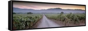 Road in a Vineyard, Napa Valley, California, USA