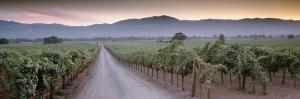 Road in a Vineyard, Napa Valley, California, USA