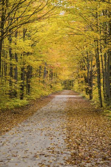 Road in Fall Color Schoolcraft County, Upper Peninsula, Michigan-Richard and Susan Day-Photographic Print