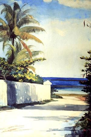 Nassau  by Winslow Homer  Paper Print Repro Orange Tree