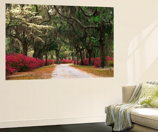 Road Lined with Azaleas and Live Oaks, Spanish Moss, Savannah, Georgia, USA-Adam Jones-Giant Art Print
