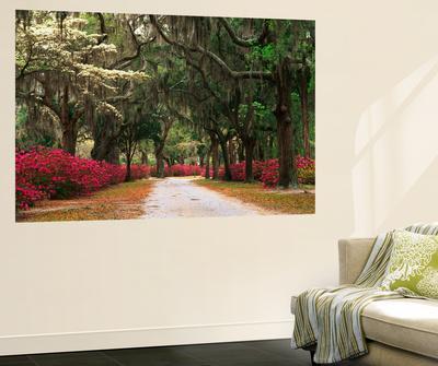 https://imgc.artprintimages.com/img/print/road-lined-with-azaleas-and-live-oaks-spanish-moss-savannah-georgia-usa_u-l-pif4o20.jpg?p=0