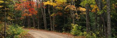 Road Passing Through a Forest, Keweenaw County, Keweenaw Peninsula, Michigan, USA--Photographic Print