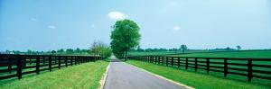 Road passing through horse farms, Woodford County, Kentucky, USA