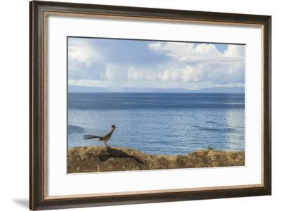 Road Runner View-Chris Moyer-Framed Photographic Print