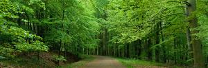 Road Through a Forest Near Kassel Germany
