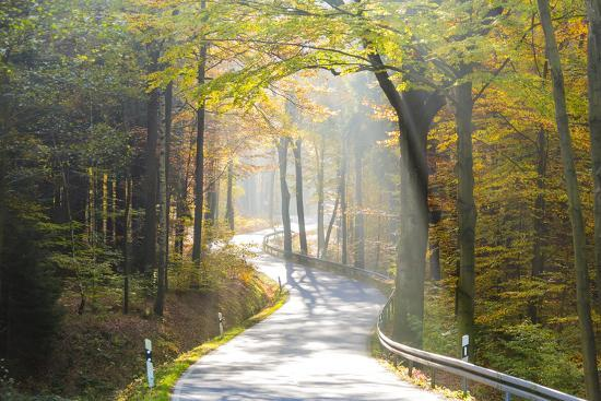 Road Through Autumn Woodland, Saxon Switzerland, Saxony, Germany-Peter Adams-Photographic Print
