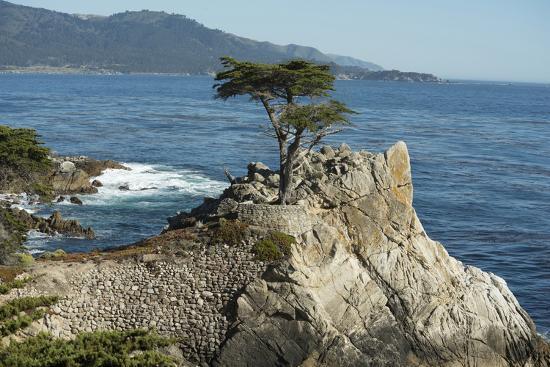 Road Through Pacific Grove and Pebble Beach-Carol Highsmith-Photo