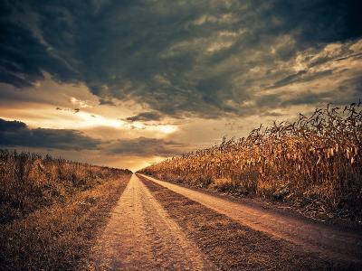 Road through Stormy Corn Field to Horizon-Alexey Rumyantsev-Photographic Print