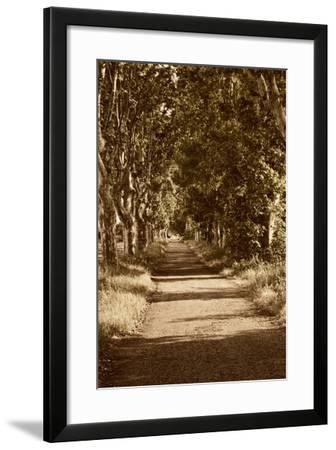 Road to St. Remy-Rachel Perry-Framed Art Print