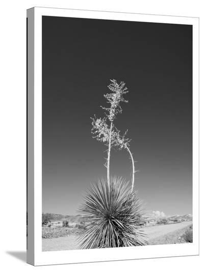 Road Trip #4-Murray Bolesta-Stretched Canvas Print