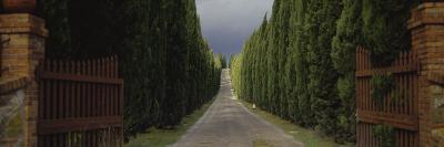 Road, Tuscany, Italy--Photographic Print