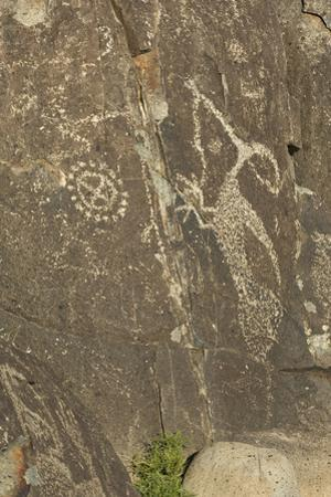 Roadrunner with a Snake and Other Jornada-Mogollon Petroglyphs at Three Rivers Site, New Mexico