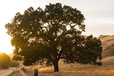 Roadside Oak-Lance Kuehne-Photographic Print