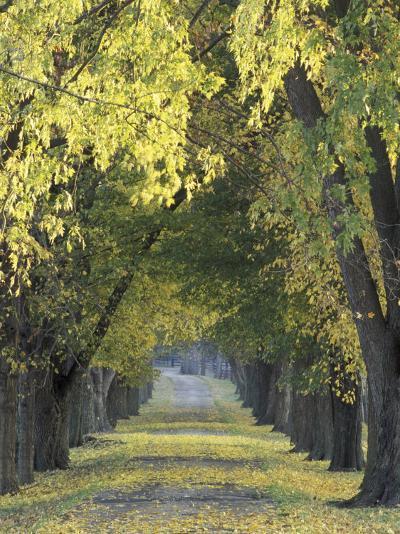 Roadway through Trees in Autumn, Louisville, Kentucky, USA-Adam Jones-Photographic Print