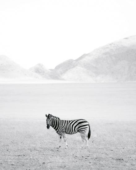 Roaming Free - Detail-Lee Frost-Giclee Print