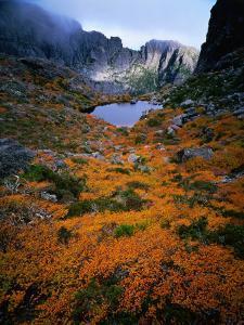 Deciduous Beech on Tasmania's West Coast Range, Tasmania, Australia by Rob Blakers